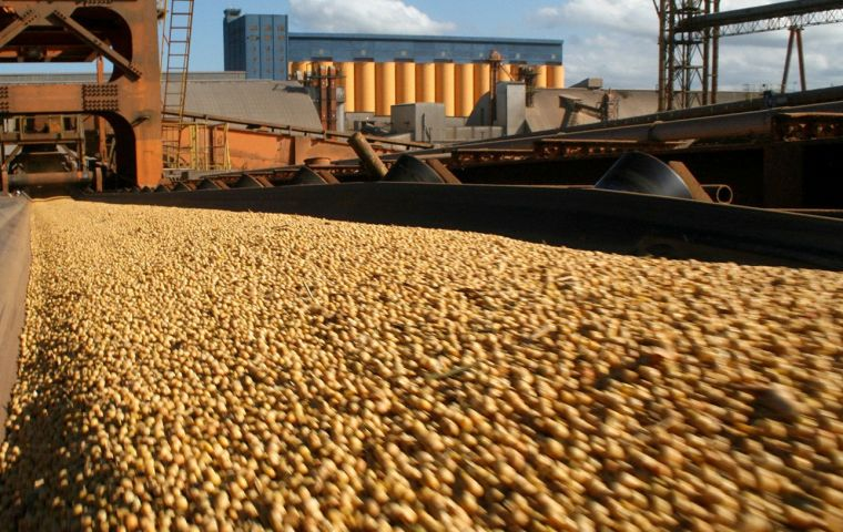 Figures released by the Ministry of Agriculture show that as of Dec. 18, exporters had registered 5.52m tons of forward sales for export of the 2019-20 soybean crop