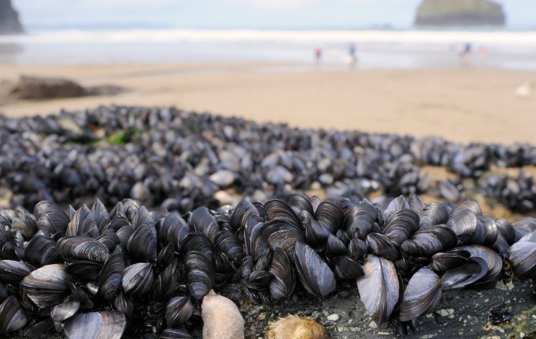 "Footage posted to social media shows rock pools choked almost knee-deep with mussel shells remarking ""they're all dead ... there's nothing left""."