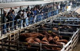 Soaring demand from China last year saw sales of Argentine frozen boneless beef double to 408,500 tonnes, worth around US$ 2 billion, official data show