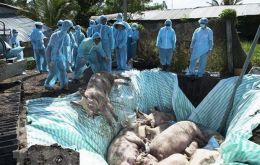 The ministry said 2,825 pigs had died by Thursday in five areas of East Nusa Tenggara