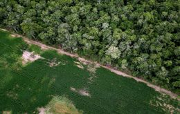 At a cost of US$1 to US$ 15 per tree, the first phase of Nestle's reforestation project could cost as much as US$ 45 million for planting alone.