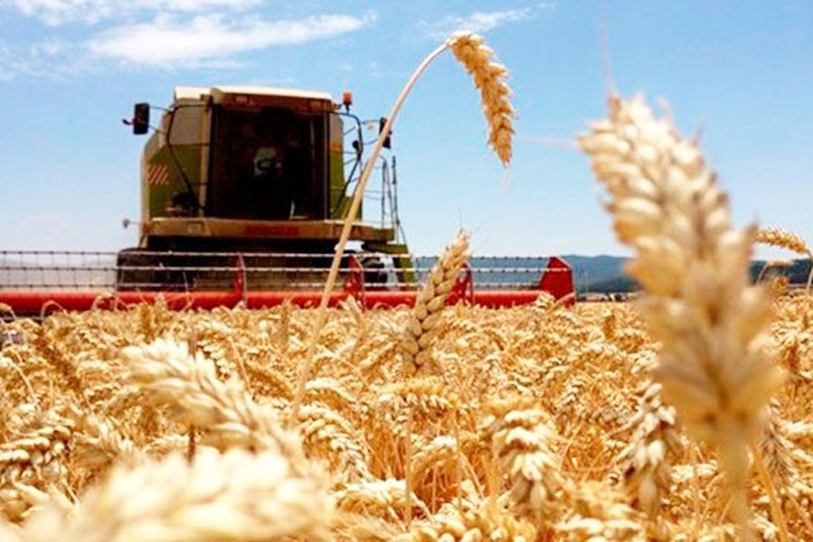 Harvest 245 9 Million Tons Of Cereals