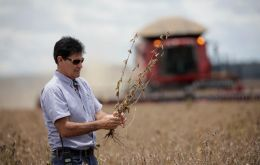 For this year, Abiove revised the projection of Brazil's soybean crop to 125.5 million tons, with exports expected to reach 80 million tons