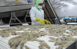 Chinese officials last month said they found six positive results in tests for coronavirus in the walls of a container carrying frozen Ecuadorean shrimp
