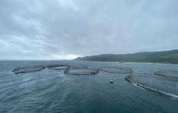 The fine, handed to salmon farming company Mowi, formerly known as Marina Harvest, was the largest ever for an environmental offense in Chile