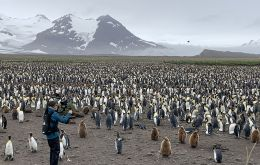 Silverback Films Ltd producer/director Jon Clay filming king penguins at Salisbury Plain, South Georgia [STEVE BROWN]