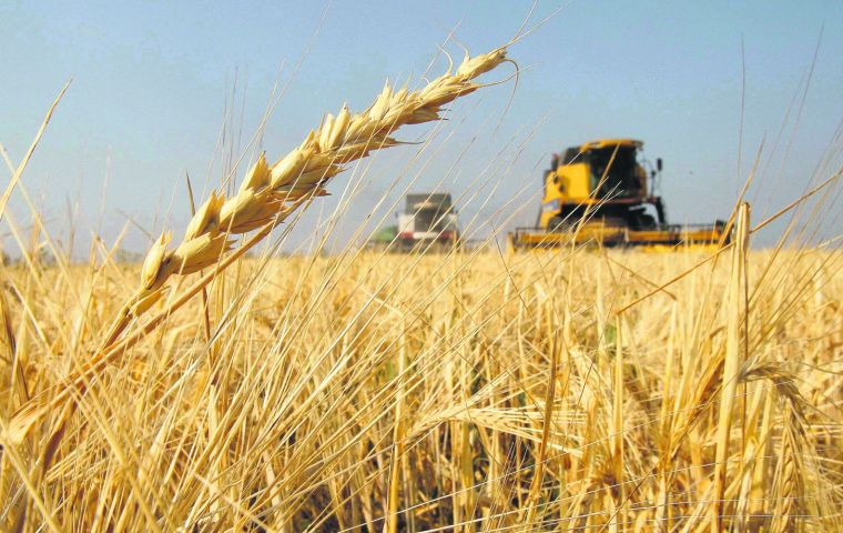 Exports of Paraguayan wheat to Brazil dropped from 464,005 tons to 267.949 tons during July