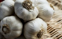 Egyptian sales of garlic to Brazil in the first eight months of 2020 exceeded US$ 5 million