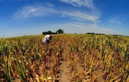 Lack of sufficient water in the country's prime production region, Cordoba, Santa Fe and Entre Rios provinces, is delaying the planting of early corn.