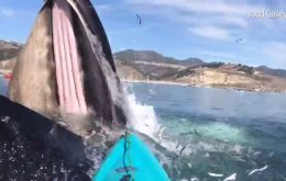 The event was caught in video and has made its round on the internet. Humpback whales in California are known to be active all year-round,