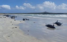 It is unclear what caused the stranding on the islands, which are 800km east of New Zealand.