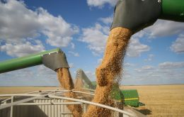Wheat export prices rose, linked to reduced harvest prospects in Argentina, as did maize prices on account of lower output expectations in US and Ukraine