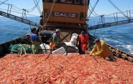 "Puerto magazine points out that some 30,000 tons are discarded during the shrimp season, ""an illegal situation that occurs despite the Federal Fisheries bill in its Article 21"""