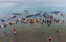 The governor said there will be an investigation into the stranding and samples from dead whales will be sent to a regional university for study