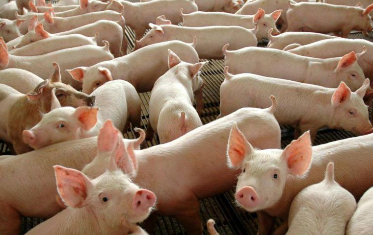 In the first two months, Brazilian pork exports reached 144,200 tons, 6.12% higher year to year, when 135,900 tons were exported