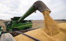 Nová správa USDA ukázala, že oblasť vysadená sójovými bôbmi v USA zaostala za očakávaniami trhu o zhruba 600 000 hektárov.