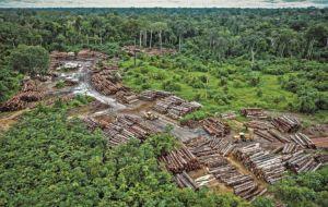 Este novo relatório é considerado o primeiro relatório que liga o desmatamento ao impacto na saúde global.