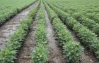 Over a million hectares are now planted with soybeans