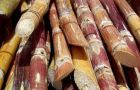 Brazil's sugar cane has dropped significantly